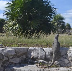 Iguana and tree