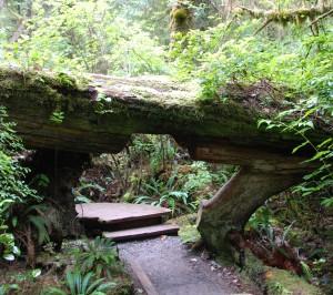 walkway under tree by Bill