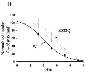 effect-of-extracellular-ph-on-calcium-uptake-through-trpv5-in-oocytes